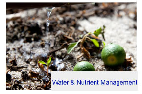 Water and nutrient management